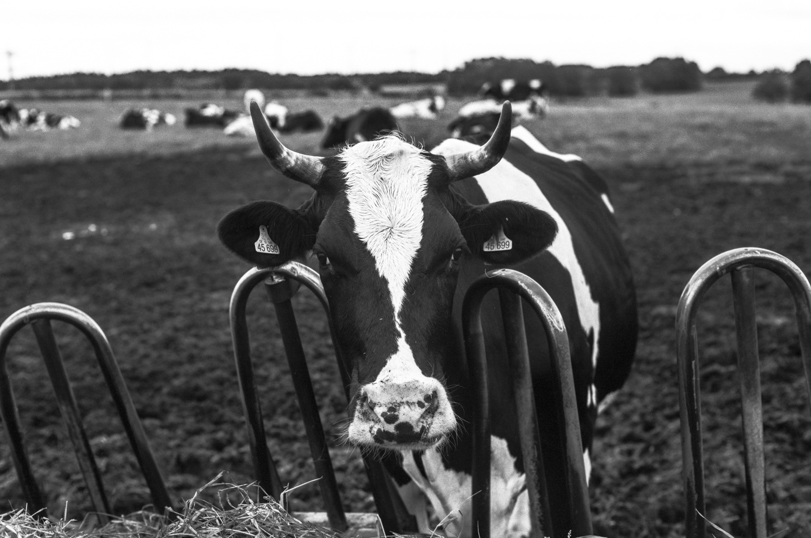 PhotoExif - Camera: Leica R7, Film: Rollei Retro 80S, Comment: